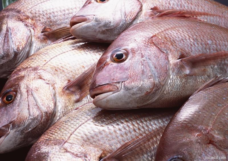 Quitar el sabor del pescado congelado - Cocinar pescado congelado ...